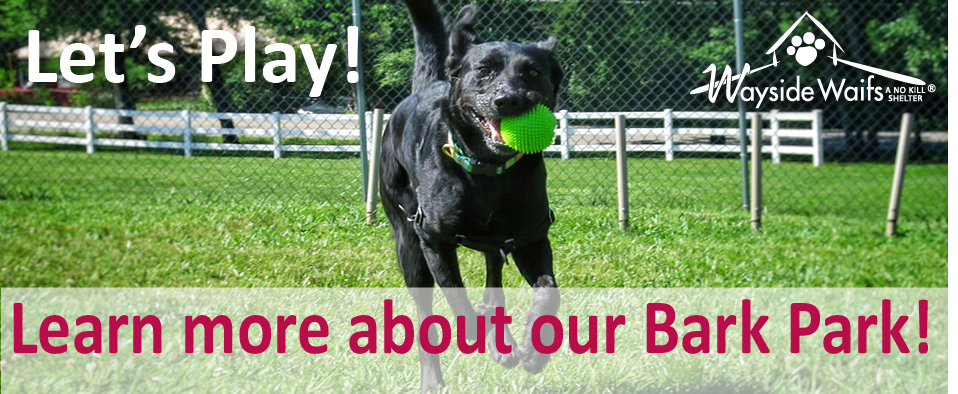 Learn more about our Bark Park
