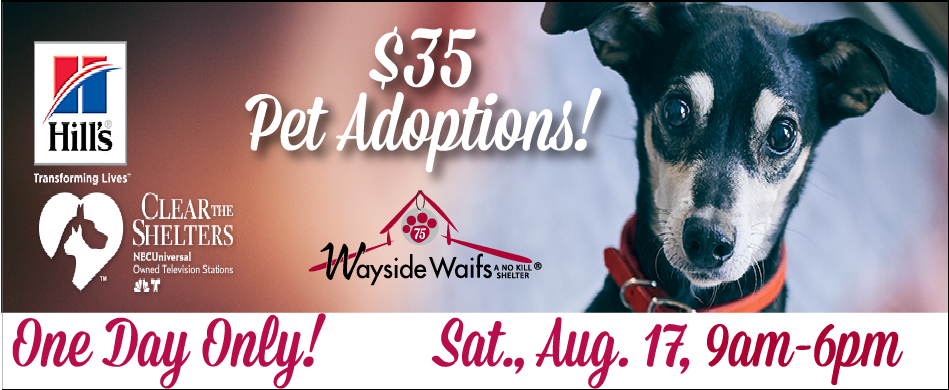 $35 Pet Adoptions August 17th