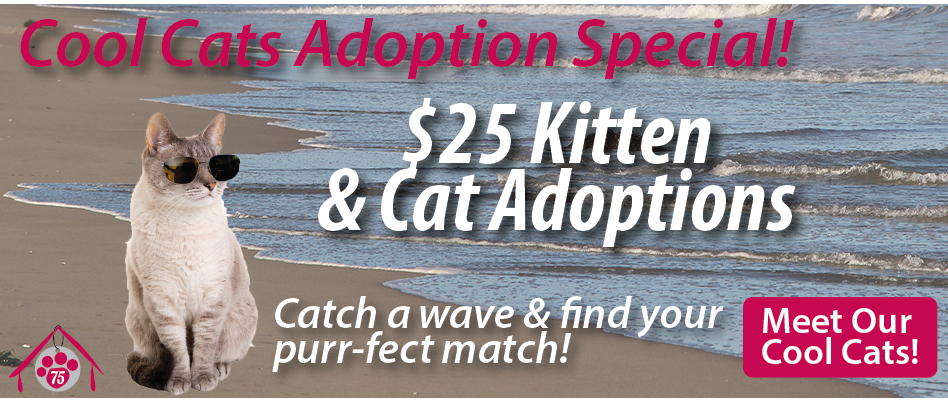 All cat and kitten adoptions only $25!