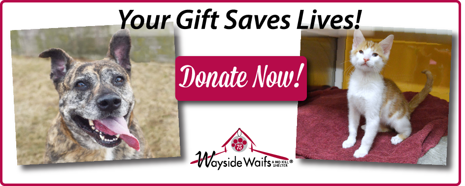 Donate now to provide safe rescue!