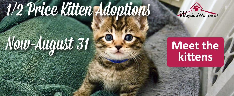 1/2 price kitten adoptions now through August