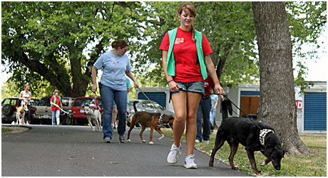seasoned volunteers