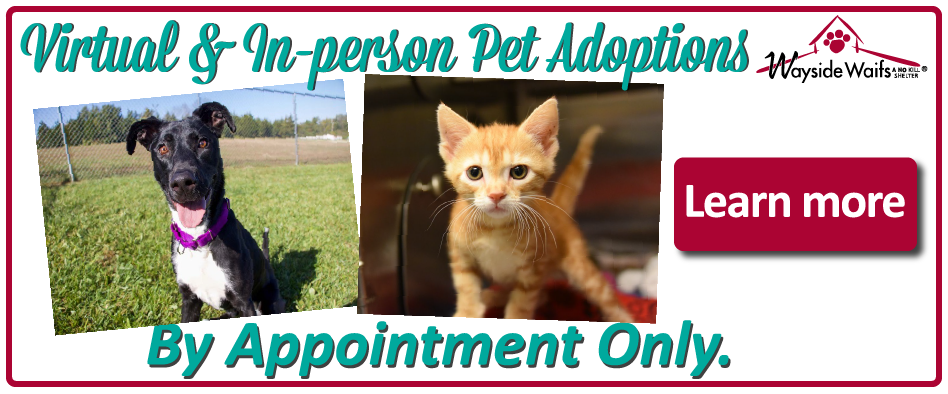 All adoptions by appointment only
