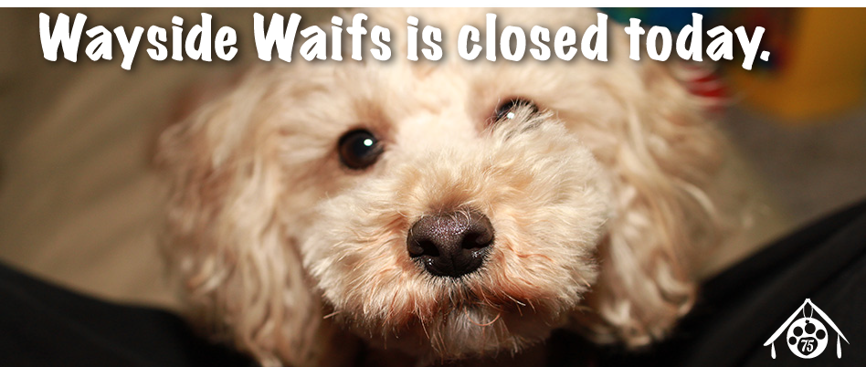 Wayside is closed for adoptions today due to winter storm